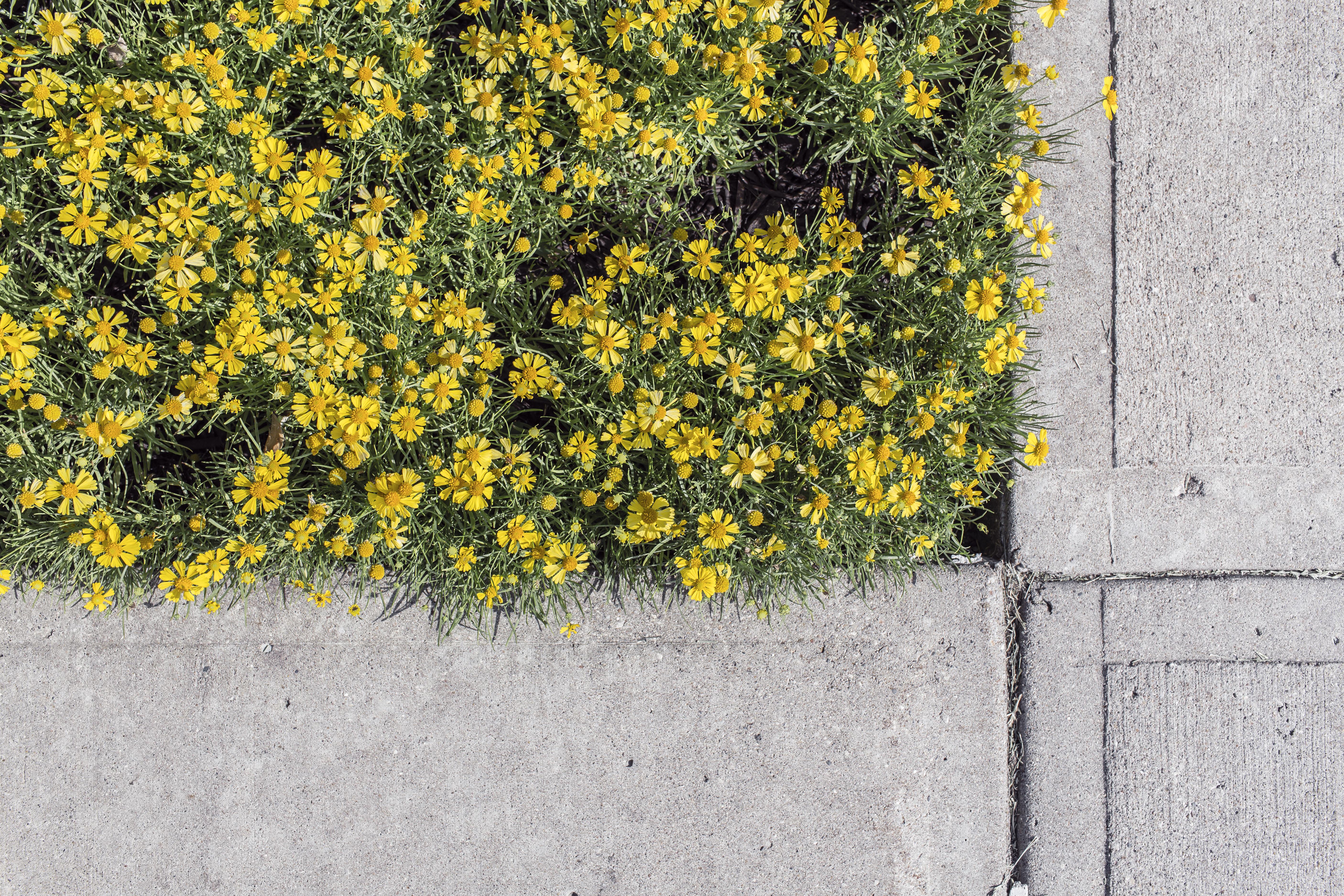 ブロックと花